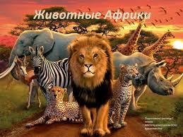 Презентация на тему Животные Африки класс Скачать бесплатно  Животные Африки 1650 15%1650 15% Подготовила ученица 7 класса МБОУ