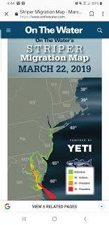 Striper Migration 2019 Salt Water Maine Fly Fish