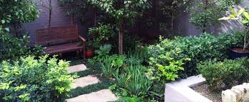 Small Picture Grant Taylord Gardens Garden Design and Maintenance Sydney
