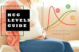 Beta Results Pregnancy Chart Hcg Levels Everything You Need To Know About Hcg