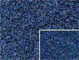 blue formica countertop repair north bay village blue storm laminate countertop blue formica countertops