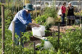 community gardening. Randwick Community Organic Garden Photo: Russ Grayson Gardening A