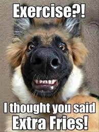 Funny Dog Quotes Extraordinary Funny Animal Pictures Of The Day 48 Pics Dog Quotes Pinterest