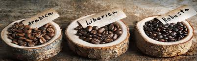 Bu günlük hayatımız için ne kadar da önemli. Coffee 101 Coffee Beans