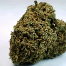 Image result for acdc strain