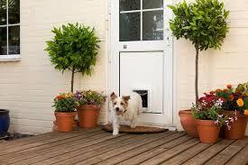 smart pet door