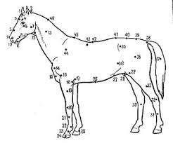 Экстерьер лошади пригодность лошади спорта телосложение  Экстерьер и учение об оценке лошади