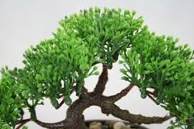 office tree. Bonsai Tree In Oval Pot, Artificial Plant Decoration For Office And Home 14 Cm Y