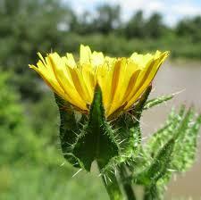 une plante Martin 1er avril trouvée par Jov' Images?q=tbn:ANd9GcRiZ_hgO1CmrGHRHr9rMnqJ30zXaIsuwdWrEJ98J16hsYfR1tQzJw