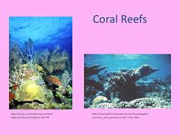 hw complete coral reef essay prompt due friday chapter  coral reefs facts article discussion 5