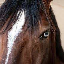professional horse face photography. Interesting Photography O Is For OneHorsed Opinions In Professional Horse Face Photography W