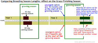 Your Cattle Breeding Season Should Only Last 42 Days