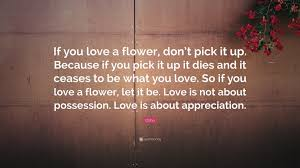 osho e if you love a flower don t pick it up