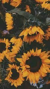 Sunflower wallpaper, Aesthetic iphone ...