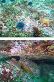 glass beach sea life underwater