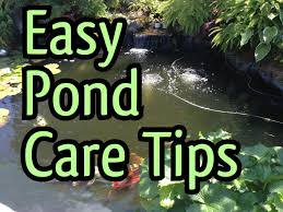 how to clean a koi pond. Perfect Koi Easy Fish Pond Maintenance TIPS  How To Clean A POND PUMP And Increase The  Water Flow Again  YouTube In To Clean A Koi