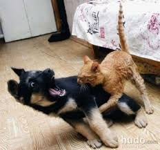 dog and cat love each other. Brilliant Other My Cats And Dog Love Each Other On Dog And Cat Love Each Other V