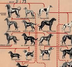 Dog Genealogy Chart Dog Breed Family Tree Dog Breed Genealogy Dogs Dog