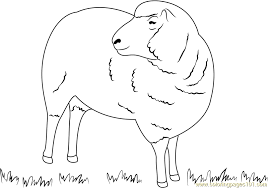 Small Picture Cloned Sheep Coloring Page Free Sheep Coloring Pages