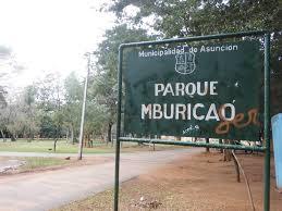Resultado de imagem para Mburicaó