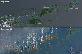 Image result for caribbean trees stripped by hurricane