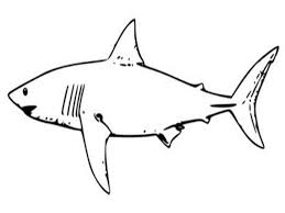 Small Picture Adult shark color page Free Printable Shark Coloring Pages For