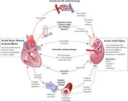Pathophysiology Of Chf Herbs For Renal Failure Effects Overcomekidneydisease Com H