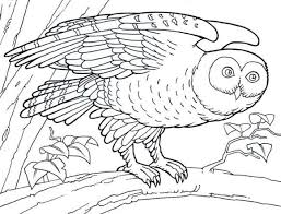 Small Picture Barn Owl Coloring Pages Print Animal Coloring pages of