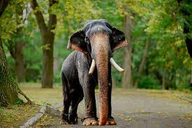 Elephant Images Hd Indian - 1600x1066 ...