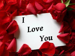 i love you rose photo