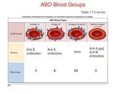 Abo Blood Groups Table 17 4 Similar Anti A And Anti B
