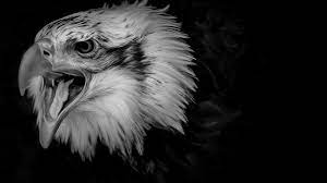 1600x900 black eagle wallpaper for ...
