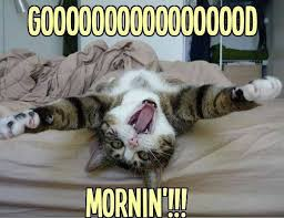 good morning funny cats