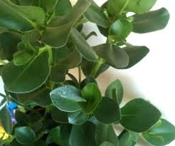 top common indoor house plants awesome tropical exotic with names and images in hindi
