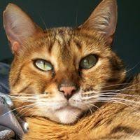 Sonja Kirk (trampus53) - Profile   Pinterest