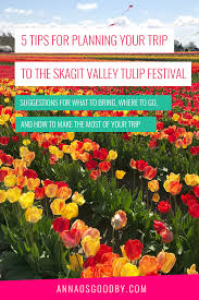 5 tips for planning your trip to the skagit valley tulip festival
