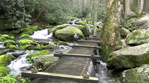 roaring fork motor nature trail great smoky mountains national park you