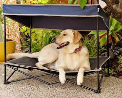 pet shade with elevated mesh bed