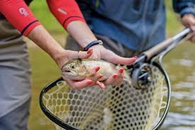 10 Top Rated Rivers For Trout Fishing In North Carolina