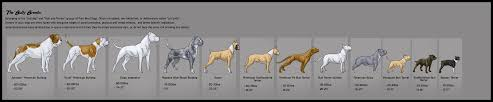 Pitbull Size Chart 6 The American Bully Breed Type Bully Breed Size Chart