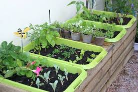 vegetable container gardening ideas