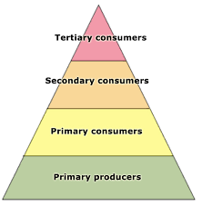 animal food pyramid. Brilliant Food Move You Mouse Over The Pyramid To Find Different Plants And Animals At  Levels In Pyramid For Animal Food Pyramid