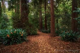 descanso gardens la cañada flintridge california a wonderful botanical garden in the heart