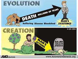 effective essay tips about creation vs evolution essay the proposed concept is simply acceptance of the fundamentalist version of genesis