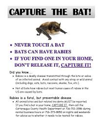 rabies in dogs fatal virtually extinct disease capture the bat