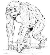 Afrikaanse Chimpanzee Kleurplaat Gratis Kleurplaten Printen