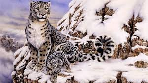 Image result for Snow Leopard