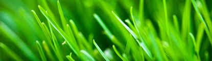 grass blade close up. Green-grass-blades-close-up-background-header.jpg (1280×375) | Banners Pinterest Grass Blade Close Up