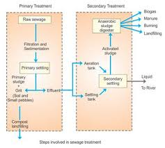 Explain The Different Steps Involved In Sewage Treatment