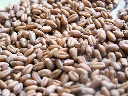 Wheat Berry Wikipedia